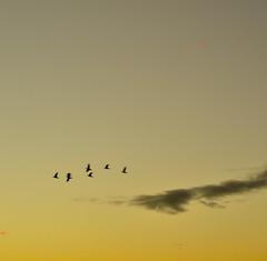 Ecclesiastes 2:26 (gnivmcelada) Tags: sunset sky cloud sun birds yellow photography nikon philippines manila bibleverse d7k d7000 gniv nikond7000 ecclesiastes226