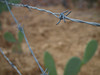 barbed wire and cactus