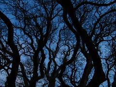 In the woods (monkeyiron) Tags: scotland perthshire newyear dunkeld birnam
