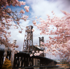 the anticipation of spring (manyfires) Tags: pink trees film oregon square portland holga spring blossoms toycamera bloom pacificnorthwest sakura pdx steelbridge blueskies cherrytrees waterfrontpark