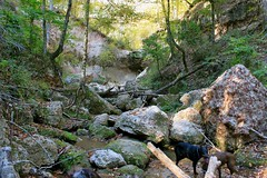 (Angie Antimatter) Tags: autumn trees dog tree fall dogs nature leaves creek waterfall louisiana hiking logs boulder pitbull trail doberman