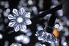 Light Flowers (Fire At Will [Photography]) Tags: christmas winter light holiday festival night garden botanical virginia twilight lewis richmond va dominion rva ginter