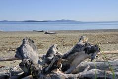 ISLAND VIEW (DESPITE STRAIGHT LINES) Tags: sea canada beach sand nikon day bc clear driftwood d300 islandviewbeach ilobsterit