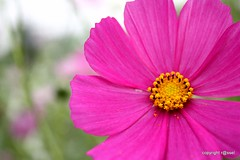 The Land of Flowers (mahmud.rassel) Tags: flower nature bongo bangladesh bangla bengali bangali banga canon450d gulshan1