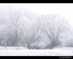 Eiskalt (H. Eisenreich Foto) Tags: morning trees mist cold fog prime photo ic frost foto fotografie hans award frosty heike tones kalt landschaft bume morgen 2012 reise frostig klte eisig reisefotografie landschaftsfotografie schmidmhlen flickraward eisenreich reisefoto eijomian landschftsfoto