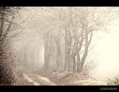 The Way of Destiny (H. Eisenreich Foto) Tags: kalt cold winter frost eisig frosty mist fog nebel gattershof allee alley schmidmhlen vilshofen oberpfalz upper palatinate bume trees farben tones mystical weg way hans eisenreich heike ic eijomian foto fotografie reise landschaft reisefoto reisefotografie landschftsfoto landschaftsfotografie prime photo award 2012