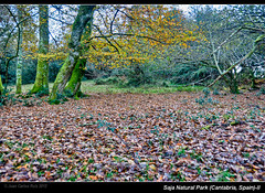 Saja Natural Park (Cantabria, Spain)-II (Juan C Ruiz) Tags: park trees leaves hojas arboles natural cantabria haya fagus saja ucieda silvática