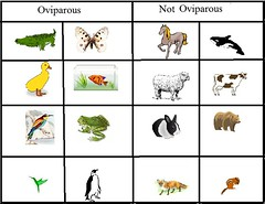 Oviparous and Non-Oviparous Animals
