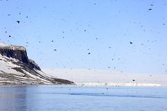 "Die Vogelfelsen von Alkefjellet, Spitzbergen • <a style=""font-size:0.8em;"" href=""http://www.flickr.com/photos/73418017@N07/6730124439/"" target=""_blank"">View on Flickr</a>"