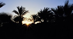 Warm feelings on miserable weather day (Phototropy) Tags: blue sunset sky sun holiday hot leaves warm branches cyprus palmtrees sunrays palmae arecaceae palmaceae