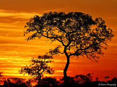 Hot sunset (JC Patricio Photography) Tags: light sunset pordosol red brazil orange sun tree colors yellow brasil clouds photos dusk natureza brazilian strong cerrado savannah fotografia rvore matogrosso entardecer riocuiab wowhalloffame jcpatricio bestcapturesaoi mygearandme mygearandmepremium mygearandmebronze mygearandmesilver mygearandmegold mygearandmeplatinum mygearandmediamond musictomyeyeslevel1 rememberthatmomentlevel4 ccoresfortes rememberthatmomentlevel1 flickrsfinestimages1 rememberthatmomentlevel2 rememberthatmomentlevel3 rememberthatmomentlevel5