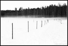 Paddock Fence in Fog (mmoborg) Tags: winter bw snow cold fog kyla blackwhite vinter sweden sverige snö 2012 dimma svartvitt mmoborg mariamoborg thepinnacle20120125
