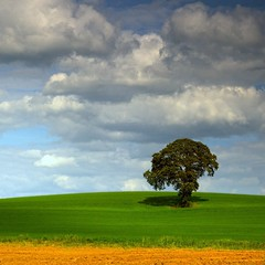That magical tree. (Edward Dullard Photography. Kilkenny, Ireland.) Tags: ireland sky tree green nature field clouds landscape eire emeraldisle irlanda ierland carlow edwarddullardphotographykilkennyireland flickrstruereflection1