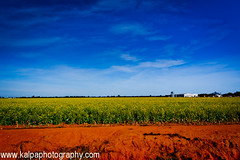 Summer Landscape (Thiru Murugan) Tags: blue red summer yellow landscape australia victoria redsoil canolafields bandsofcolour