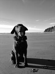 (everkamp) Tags: ocean camera beach oregon coast blackwhite labrador oliver chocolatelab pacificocean manzanita iphone manzanitabeach iphoneography snapseed
