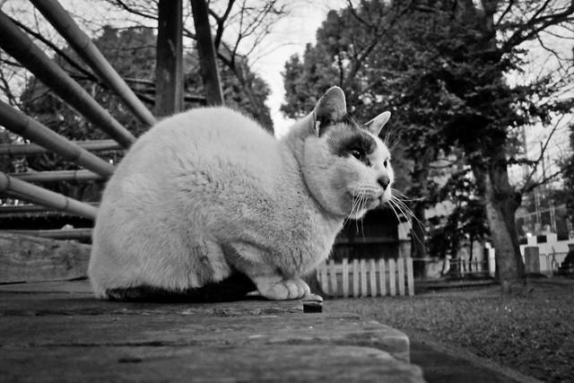 Today's Cat@2012-02-06