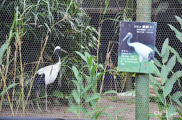 木柵動物園鳥園16.jpg