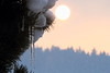 Greetings from Europe (Elysium 2010) Tags: winter sun snow cold ice fog pine forest sunrise landscape icicle february february2012 pinusmugho