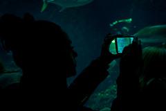 A little window on a little ocean (Herebuse) Tags: ocean sea mer fish water museum aquarium eau muse monaco poisson ocanographie