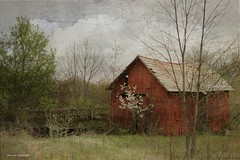 A Dogwood Grows (raewillow) Tags: ohio texture barn rural frank spring you thank kerstin