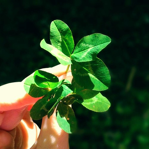 Whisper your #wish right 💜 #littlemagic #magicaltime #magic #fourleaveclover #nature