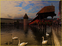 Luzern (amenauss) Tags: old city travel bridge roof light sky urban sun sunlight lake color bird nature water monochrome animal architecture landscape schweiz switzerland town duck swan wings europe cityscape suisse natural outdoor experiment luzern gimp svizzera lucerne blend