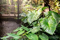 Regnskog i Stockholm (Pernilla Lindblom) Tags: nature rainforest natur greenery jobb djungel fjärilshuset uppdrag regnskog grönska realgymnasiet