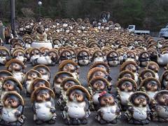 DSCN4796 (japantrends) Tags: animal japan  mammalia  shigaraki   asianracoon     shigapref  shigarakicho   koukashi