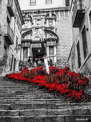 Saint George's Sword (skansen81) Tags: old flowers flores alfombra saint carpet town george blood time olympus medieval girona sword temps casco antiguo antic gerona flors casc 2016