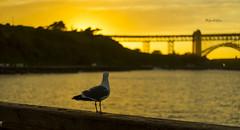 Bird watching sunset (lpshikhar) Tags: sanfrancisco california street sunset portrait sky blackandwhite birds landscape photography scenic goldengatebridge baybridge bayarea