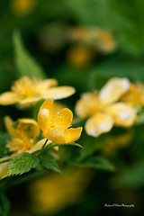 small spring flowers Test Nikon D750 / Tamron 90mm Macro 2.8 VC (F004) + Filter Hoya HMC UV (fredpot1963 merci pour les 7.4 Millions vues et pl) Tags: flowers test macro spring nikon uv small filter d750 28 tamron 90mm vc hmc hoya f004