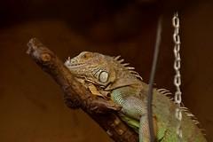 Reptiel. (limburgs_heksje) Tags: nederland niederlande netherlands limburg born kasteelpark dierenpark reptielen