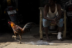 (viduthalai1947) Tags: street india streets morninglight streetphotography streetscene chennai connection tamilnadu streetphotos connections shadowandlight streetcolor chennaistreets indianstreetphotography indianstreets img2960 streetconcept indianphotos worldstreetphotography viduthalaimani