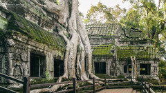 Ta Prohm, looking for Lara Croft. (Franz - Jimenez) Tags: angkor angkorwat taprohm tombraider nature landscape cambodia camboya temple ruins icon asia southeast canon eos600d backpacking backpacker traveller traveler globetrotter