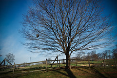 Treeeee (bee) (slithy-toves) Tags: autumn newyork tree fall day bees awesome clear hive tarrytown stonebarns