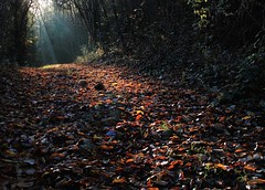 Morning walk (da.geli) Tags: autumn trees leaves niceshot path morningwalk raysofsunshine mygearandme mygearandmepremium artistoftheyearlevel2 musictomyeyeslevel1