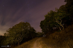 Napa Night - [EXPLORED] (andreaskoeberl) Tags: california road longexposure tree nature grass northerncalifornia night clouds dark stars lowlight nikon path illuminated napa napacounty d7000 tokina1116f28 nikond7000 andreaskoeberl