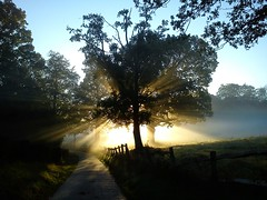 October Sunrise (suerob) Tags: morning blue trees england sky sunlight nature sunrise dawn sussex countryside october quiet peace bright clear ethereal rays spiritual heavenly tranquil atmospheric sunbeams xperiax10mini
