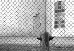 Fire (• CHRISTIAN •) Tags: door urban blackandwhite bw industry monochrome hydrant fence concrete nikon industrial montréal noiretblanc nb silo porte industrie urbain industriel clôture béton bornefontaine d80