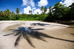 Palm Shadows (ModernDayGilligan) Tags: beach water palm grenada caribbean coconuttree coconutpalm lasagesse lasagessebeach stdavidgrenada