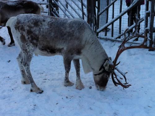 111208_Lappland_290