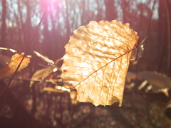 Morning (pfarrell95) Tags: wood morning autumn trees light sun fall nature leaves forest leaf nikon branch natural coolpix tone l120
