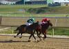 "2011-12-09 (66) r3  Malcolm Franklin on #7 Culpepper Colonel (JLeeFleenor) Tags: laurelpark marylandracing racing horses jockeys thoroughbreds horseracing thoroughbredracing marylandhorseracing jockey جُوكِي ""赛马骑师"" jinete ""競馬騎手"" dżokej jocheu คนขี่ม้าแข่ง jóquei žokej kilparatsastaja rennreiter fantino ""경마 기수"" жокей jokey người equine equestrian cheval cavalo cavallo cavall caballo pferd paard perd hevonen hest hestur cal kon konj beygir capall ceffyl cuddy yarraman faras alogo soos kuda uma pfeerd koin حصان кон 马 häst άλογο סוס घोड़ा 馬 koń лошадь maryland"