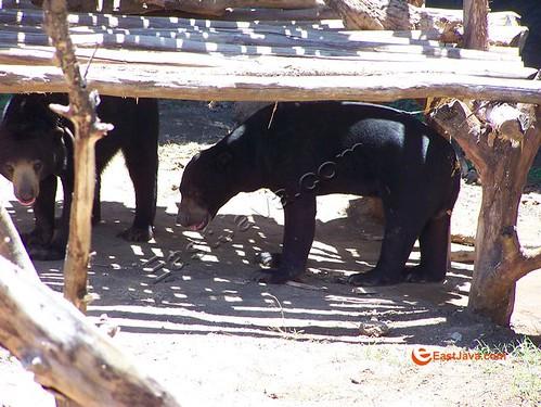 Honey Bear On Their Sanctuary