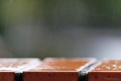 20111225-17-Hobart Christmas rain (Roger T Wong) Tags: christmas water rain drops australia tasmania hobart canoneos50d canonef70200mmf4lisusm canon70200f4lis