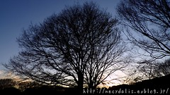 winter has come... (necydalis) Tags: park winter sunset tree japan japanese dusk 4 yoyogi dlux