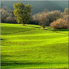 green scenery (Luigi Alesi) Tags: italy verde green canon scenery san italia country severino hills campagna lanscape marche paesaggio colline macerata coth sanseverino platinumheartaward bestcapturesaoi coth5 sailsevenseas elitegalleryaoi inspiredchoice sx230hs