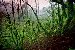 Foret de mousse ** moss forest ** (francky25) Tags: forest de moss jura foret mousse comté franche ivrey