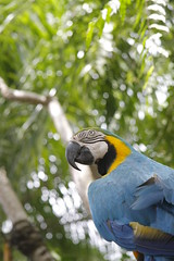 _MG_1829 (James_Roberts) Tags: bali holiday october 2011 tamanburungbalibirdpark