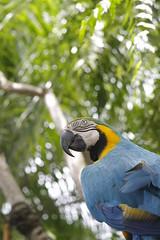 _MG_1829 (James_Roberts) Tags: bali holiday october 2011 tamanburungbalibirdpark